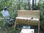 Flyttning av bin och vaxkakor