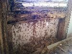 Mumma för myror